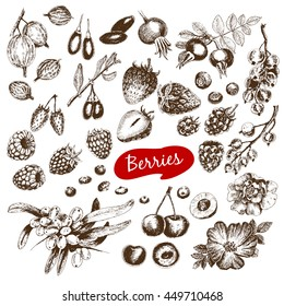 Hand drawn graaphic collection with strawberries, cherries, currants, sea buckthorn and other sketch style berries