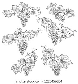 Hand drawn grape branches isolated on white background. Grapes bunch and leaf vector sketch. Black and white floral illustration.
