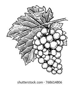 Hand drawn grape illustration. Design elements for poster, menu, banner, menu. Vector illustration