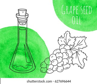 Hand drawn grape seed oil bottle with green watercolor spots. Isolated cute flask with healthy cooking oil and grape branch. Sketchy doodle illustration for aroma therapy, cosmetic, organic shop.