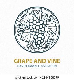 Hand drawn grape vine illustration. Grape bunch hand drawn sketch.  Grape and vine vintage style vector logo. Wine theme design template.