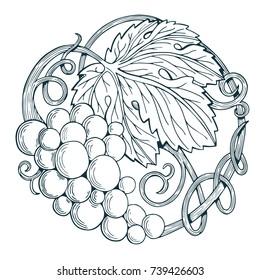 Hand drawn grape vine illustration. Wine themed logo, design element or background. Sketch style design.