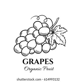 Hand drawn grapes icon. Vector badge fruit in the old ink style for brochures, banner, restaurant menu and market