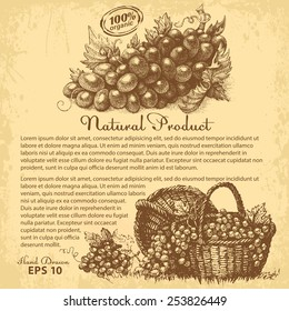 Hand drawn grapes. Vector design with copy-paste space