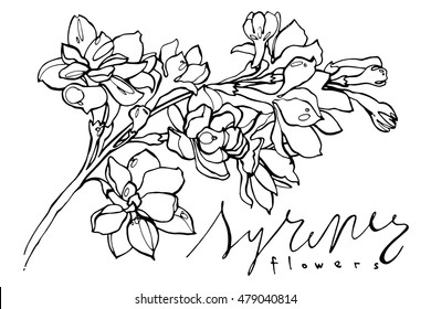 Hand drawn graphic flowers lilac on white background. Black and white vector illustration.