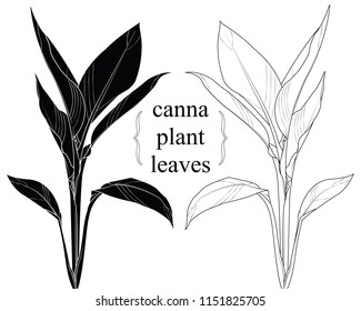 Hand drawn graphic plant over white. silhouette canna leaves. vector illustration.