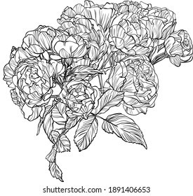 Hand drawn graphic rose flower