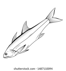 Hand Drawn Haddock. Sea Food. Haddock. Sea Fish.Tasty Seafood. Ocean Sport Fishing. Fresh Seafood Product. Delicious Haddock. Fish Meal Diet. Big Best Haddock. Fishing. Vector graphics to design.