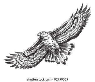 Hand drawn hawk illustration
