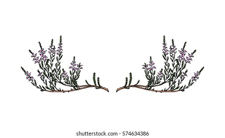 Heather Flowers Images Stock Photos Vectors Shutterstock