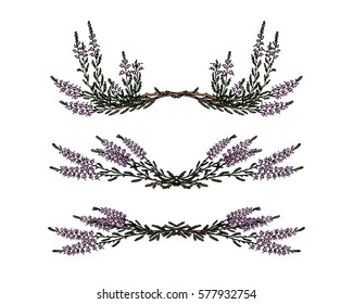 Hand drawn heather branch laurel set made in vector. Beautiful floral design elements.