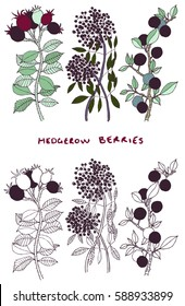 Hand drawn hedgerow plants and berries vectors