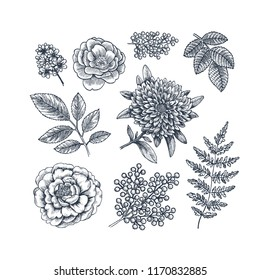 Hand drawn herb and flower set. Vintage engraved style flowers. Vector illustration