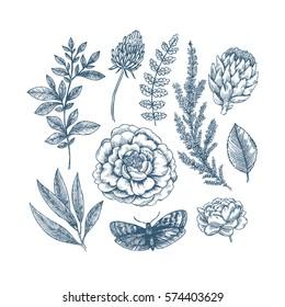 Hand drawn herb and flower set. Vintage engraved flowers. Vector illustration