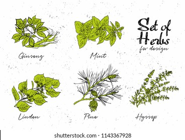 Hand drawn herbs set for medicinal, for cooking, cosmetics, store, health care, tag label, food design. Botanical illustrations for tags. Vector sketches.