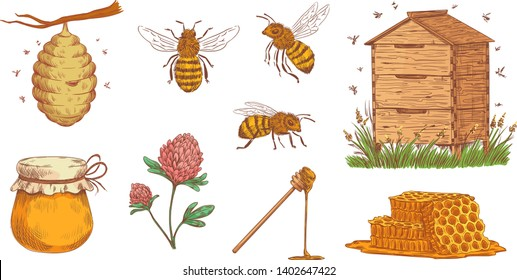 Hand drawn honey bee. Beekeeper engraving, bees honeycomb and vintage beekeeping farm. Honey nectar jar nutrition and bee insects. Colorful vector illustration isolated icons set