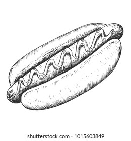 Hand drawn hot dog sketch, draft drawing on white background, vintage etching. Vector food illustration.