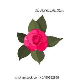 hand drawn hot pink camellia with green leaf element on white background