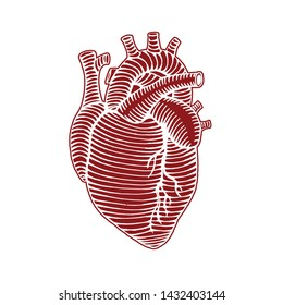hand drawn human heart drawing illustration reverse colors and outline engraved style