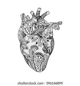Hand drawn human heart. Isolated hand drawn heart in doodle style.