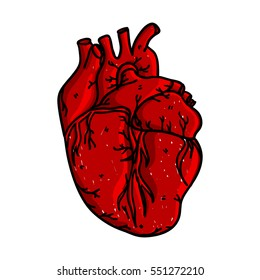 Hand drawn human heart. Isolated hand drawn heart in doodle style. Vector illustration.