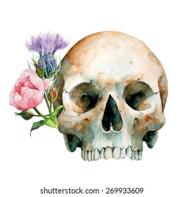 Hand Drawn Human Skull With Pink Rose and Purple Thistle, Watercolor Sketch, Vector Illustration - Halloween, Day Of The Dead.