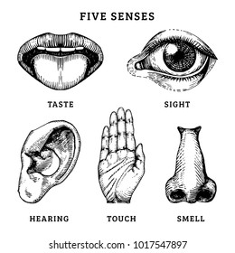 Hand drawn icons of the five human senses in engraved style. Vector illustration of sensory organs.