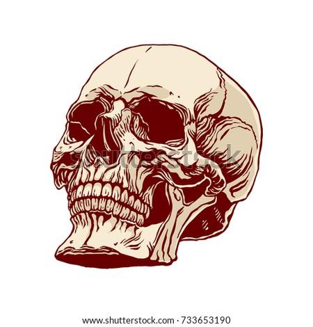 Hand Drawn Illustration Anatomy Human Skull Stock Vector Royalty