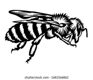 Hand drawn illustration bee black white art
