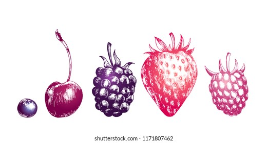 Hand drawn illustration of blackberry, bluberry, raspberry, strawberry and cherry isolated on white background. Vector engraving fruit set.