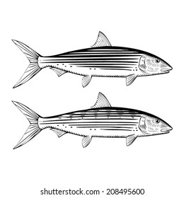 Hand Drawn Illustration of a Bonefish