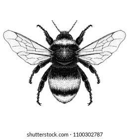 Hand drawn illustration of bubble bee