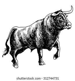 hand drawn illustration of bull on white background