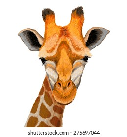 Hand drawn illustration of cute giraffe face on white background.