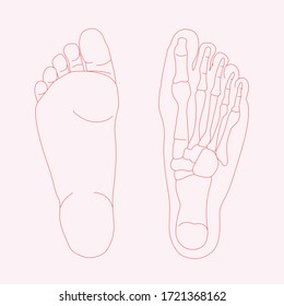 Hand drawn illustration of foot bones isolated on coloured background. red lines illustration of human anatomy.