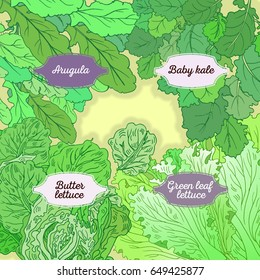 Hand drawn illustration with four lettuce sorts. Fully editable vector illustration with clipping masks. Mix lettuce set on a background signed with letters on figured tables.