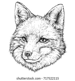 Hand Drawn illustration of FOX. Vector illustration