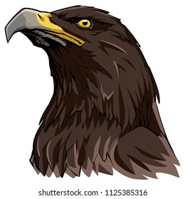 Hand drawn illustration of a Golden Eagle.