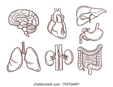 Hand drawn illustration of human organs. Medical pictures. Human anatomy and health drawing organ vector
