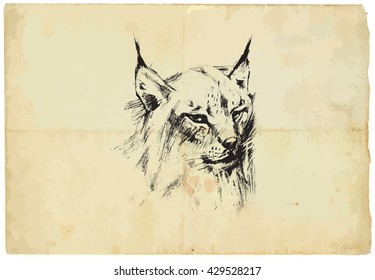 An hand drawn illustration of LYNX - Eurasian Lynx - converted into vector picture. Background, old paper, is isolated.