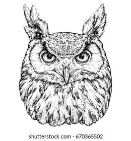 Hand Drawn Illustration of Owl. Vector illustration