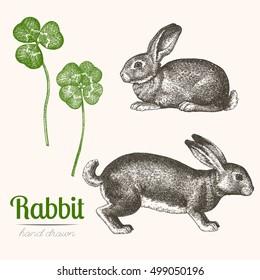 Hand drawn illustration of a rabbit. Hand drawn clovers.