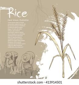 hand drawn illustration of rice. rice background design