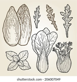 hand drawn illustration set of green salads and herbs.