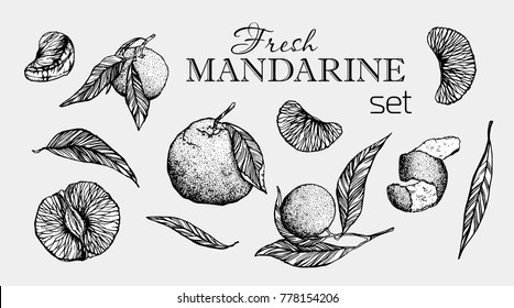 Hand drawn illustration set of mandarine