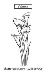 Hand drawn illustration and sketch Callas flower. Black and white with line art illustration.Idea for business visit card, typography vector,print for t-shirt.