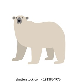 Hand drawn illustration of white bear in flat style. Standing polar bear, side view.