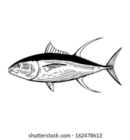 Hand Drawn illustration of a Yellow Fin Tuna