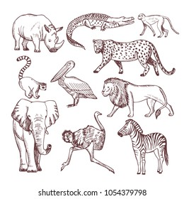 Hand drawn illustrations of african animals. Vector animal african nature, sketch wild mammal