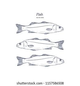 Hand Drawn Illustrations of fish.